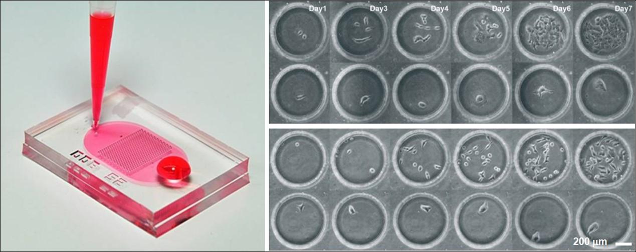 國衛院微流體生物晶片 將由元錦生技接棒延續